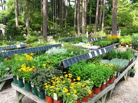 garden nursery near me photograph jpg
