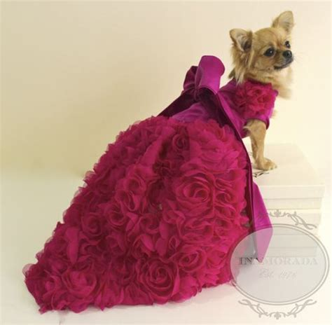 puppy clothes best 25 designer clothes ideas on pet clothes clothing and