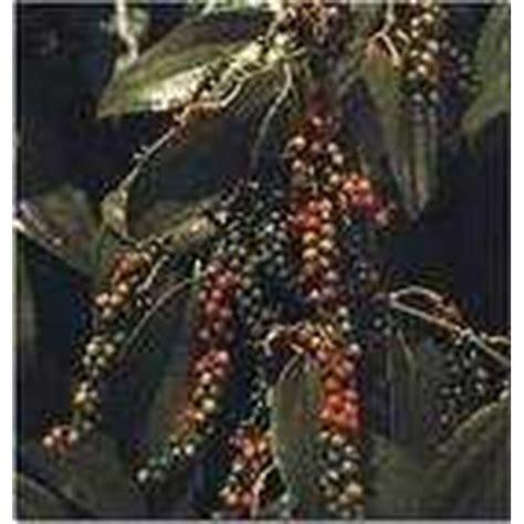 Lada Hitam Black Papper 100gr jual oleoresin lada hitam black pepper oleoresin oleh cv