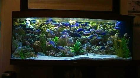 Aquarium Design Ideas by African Malawi Cichlid Fish Tank Aquarium 450l Phase 2