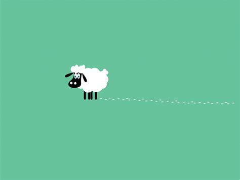 wallpaper cute design white sheep rug near black ears closed sweet eyes and nice