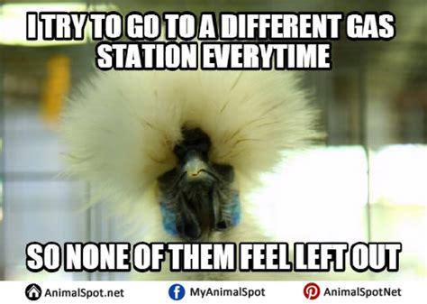 Funny Meams - bird memes