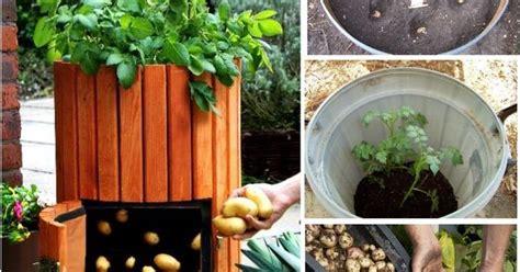potato barrel garden ideas house ideas