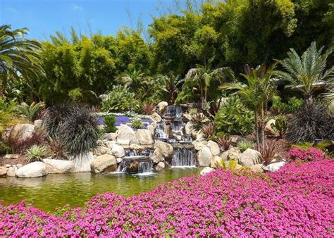 Gardens Fallbrook by Compass Garden A Riot Of Colour And Shape Picture Of