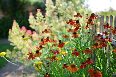 Garten Und Landschaftsbau Döbeln by Beautiful Pflegeleichte Pflanzen Garten Pictures Die