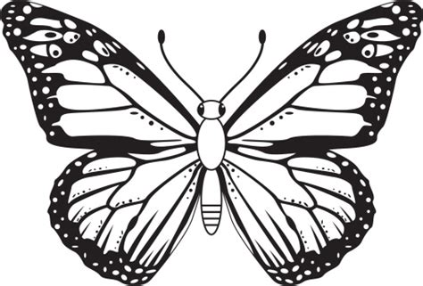butterfly pattern black and white clipart butterfly outline black and white clipart best