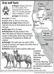 Gray wolf habitat for kids gray wolf facts