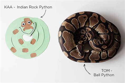 How To Decorate A House disney s the jungle book kaa snake craft all for the boys