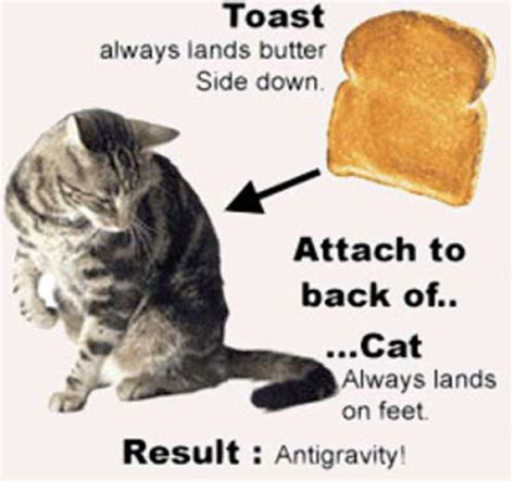 Cat Toast Meme - cat and the buttered toast paradox 1 pic izismile com
