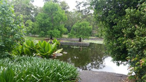 Mount Coot Tha Botanic Gardens Elopement Spots At Mt Coot Tha Botanical Gardens Brisbane City Celebrants