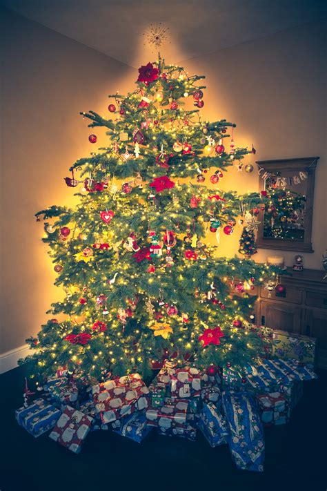 christmas tree  stock photo public domain pictures