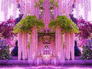 Beautiful Waterfalls With Flowers by Amazing Waterfall Flowers In Japan Beautiful Flowers