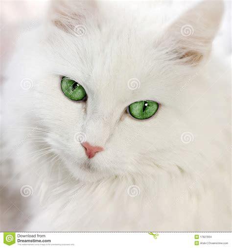 imagenes de ojos verdes de gatos gato de ojos verdes imagenes de archivo imagen 17827834
