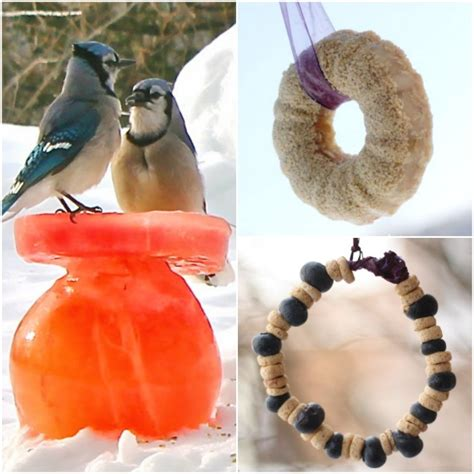 Bird Feeder Activity 32 Easy Bird Feeders Happy Hooligans