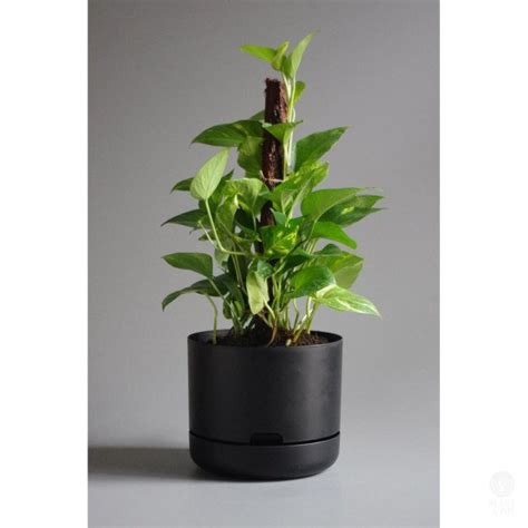 mr kitly decor self watering plant pots cool hunting mr kitly self watering plant pot 25cm black plantandpot nz