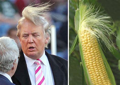 donald trump vs corn 15 things that look just like donald trump bored panda