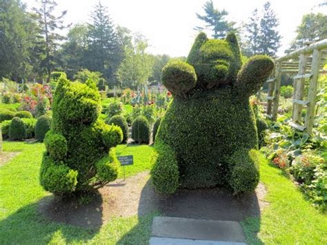 green animals topiary garden a guide to northeastern gardening green animals topiary