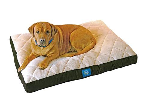xl orthopedic dog beds serta pillowtop orthopedic pet bed green xl
