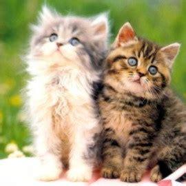 Obat Flu Kucing cara menangani flu kucing beserta gejala gejalanya
