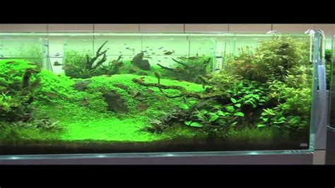 Aquarium Design Japan | adg in japan 2010 nature aquarium party youtube