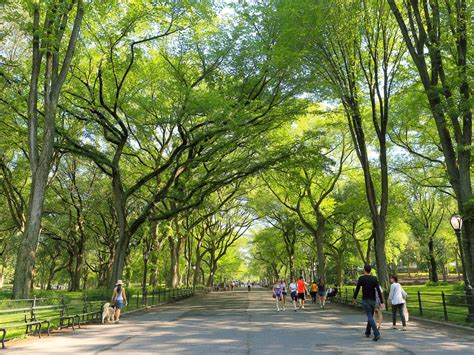 central park park central park secrets of new york s most park curbed ny