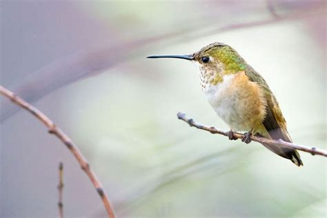 how to take exquisite hummingbird photos audubon