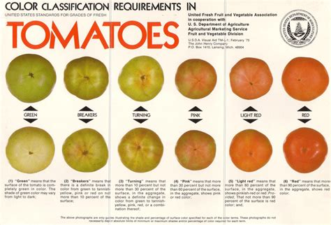 tomato color opinions on ripening