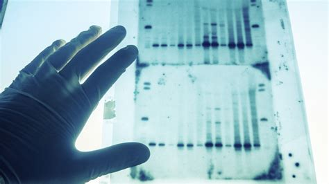 genetic test more americans are learning their roots with
