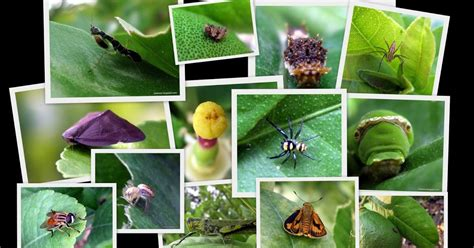 plants that repel insects in vegetable gardens 12 tips on plants that repel bugs and insects the daily coin