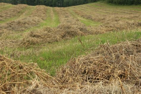 cut hay crop farm lines harvest free stock photo