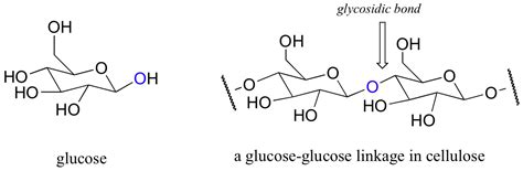 carbohydrates bonds section 9 2 digestion of carbohydrate by glycosidase an