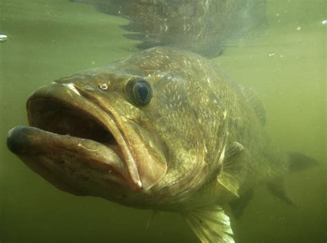 pluut platbodem currents pond bucket mouth