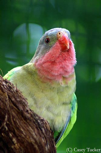 Princess Parrot princess parrot on