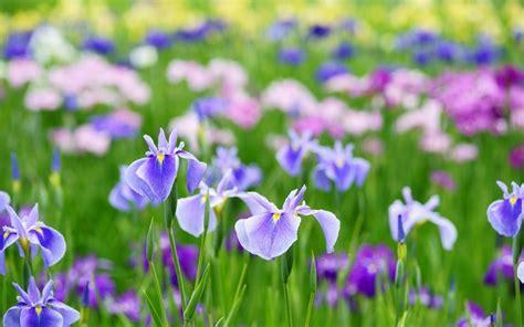 fiori di giardino foto fiori di primavera fiori in giardino