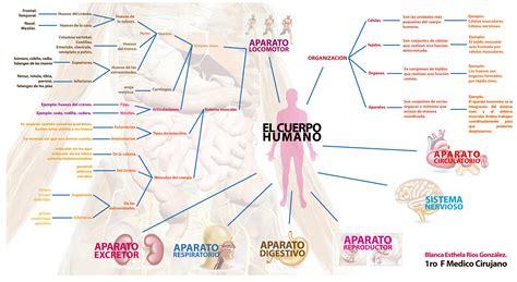 Imagenes Mapa Mental Del Cuerpo Humano | el cuerpo humano y sus aparatos y sistemas mapa