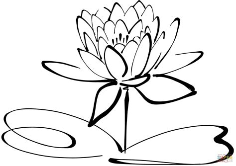 water lily png black and white transparent water lily