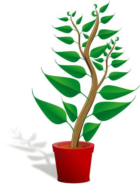 images of plants plants clip art free clipart panda free clipart images