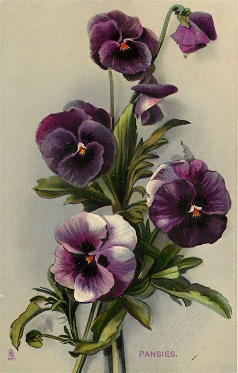 pansy flower tattoo 25 best ideas about vintage flowers on