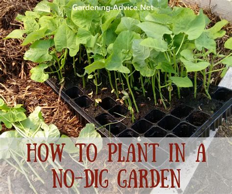 no dig vegetable garden the no dig vegetable garden