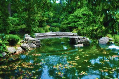 koi pond bridge bridge over koi pond photograph by bill cannon