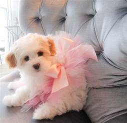 Juicy dog couture puppy in pink bow
