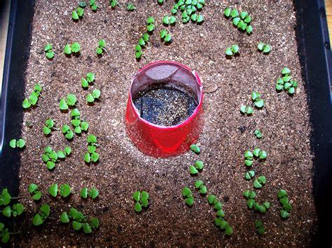 Easy Plants To Grow Indoors seedling identification a c gardening jones