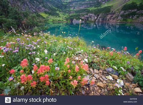 foto prati fioriti prati fioriti immagini 28 images immagine prati