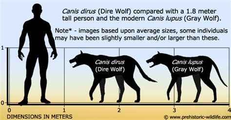 dire wolf canis dirus dire wolf