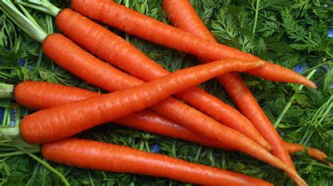pictures of carrots how to grow carrots the homestead garden