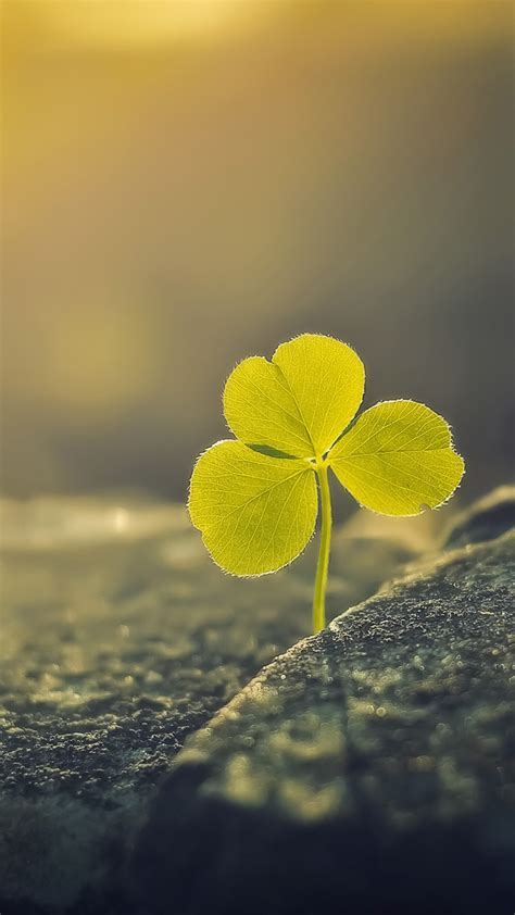 leaf clover sunlight macro android wallpaper