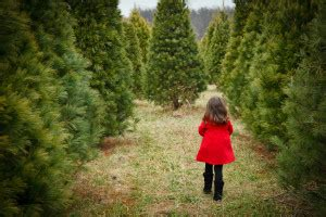 christmas tree farm pittsburgh cutting your own tree in the pittsburgh area popular pittsburgh
