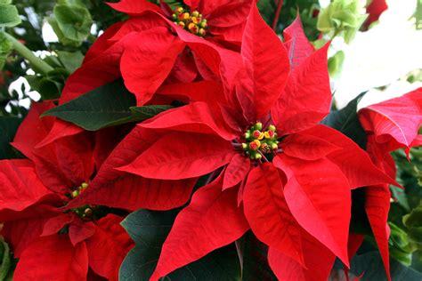 imagenes navideñas de nochebuenas la mejor nochebuena est 225 en la central de abasto pulsodf