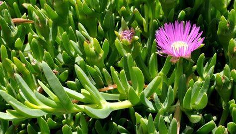 piante grasse da terrazzo stunning piante grasse da terrazzo ideas idee