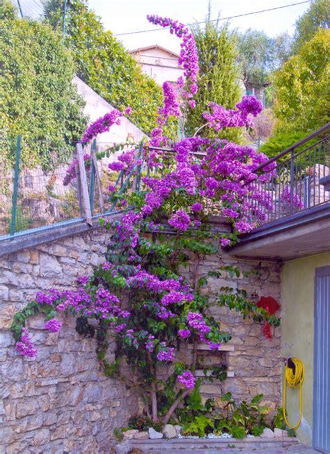 immagini di balconi fioriti nave i balconi fioriti di nave